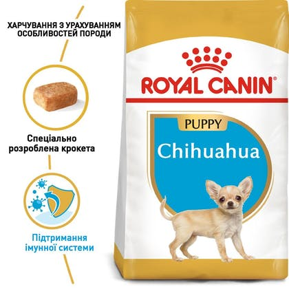 RC-BHN-PuppyChihuahua_1-UA.jpg