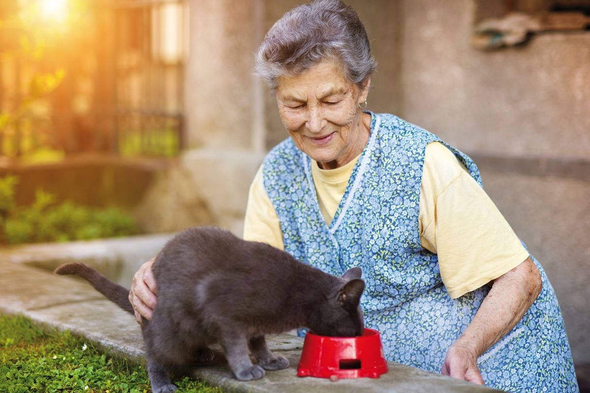 Offering food to a pet is a primary means of human expression of care.