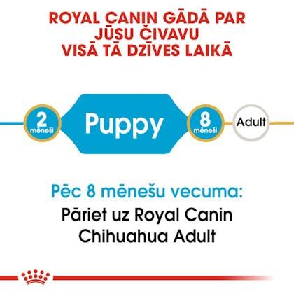 RC-BHN-PuppyChihuahua-CM-EretailKit-1-lv_LV
