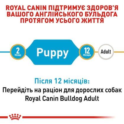 RC-BHN-PuppyBulldog_2-UA.jpg