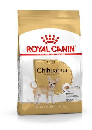 Chihuahua Adulto