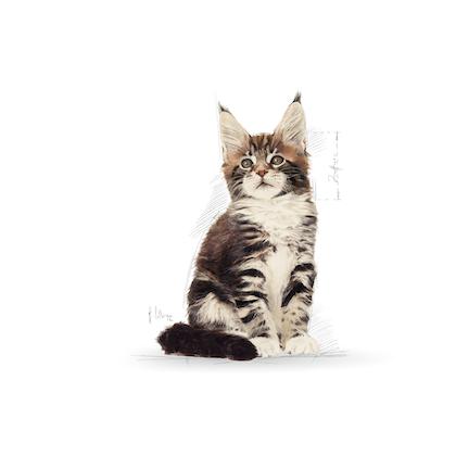 FBN - 2013 - GraphicCodes - Facings - MCOON-KIT-ILLUSTR13-FBN
