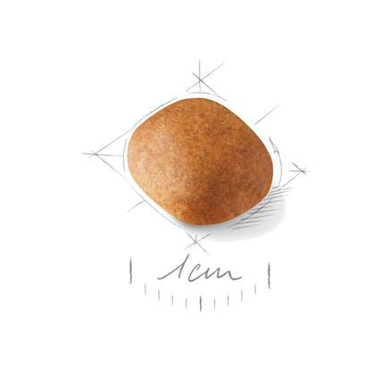 SCHNA-JU-CROC