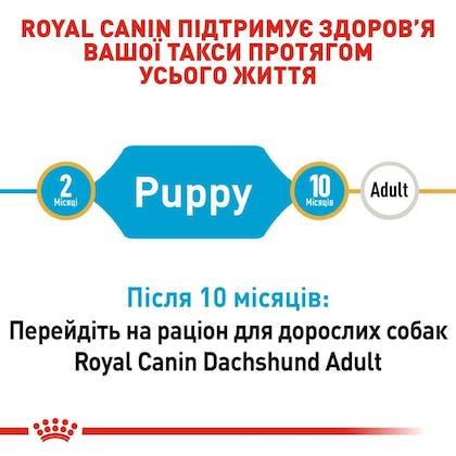 RC-BHN-PuppyDachshund_2-UA.jpg