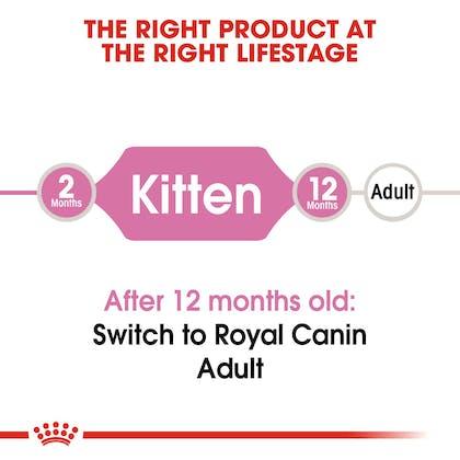 FHN-Kitten-CV-EretailKit-1