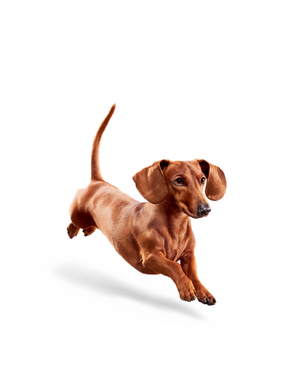Eukanuba_-_Weight_Control_Small_Breed_-_Facing_Illustration__2019_Restage__Med._Res.___Basic