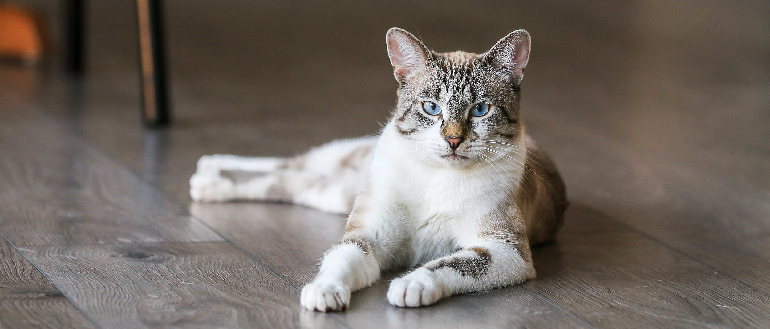 Bladder problems in cats - Royal Canin