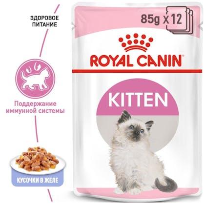 RC-FHN-Wet-KittenInstinctiveJelly_1-RU.jpg