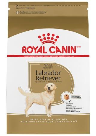 Labrador Retriever Adulto