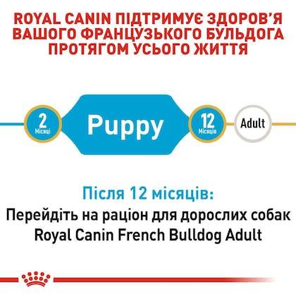 RC-BHN-PuppyFrenchBulldog_2-UA.jpg