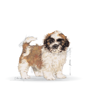 BHN 2012 - Part 1 - Emblematic pets pictures - SHIH-JU-BHN-ILLUSTR