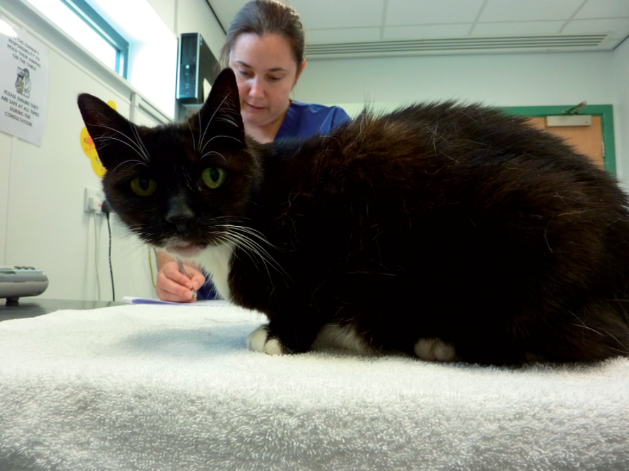 Geroscience and the aging cat