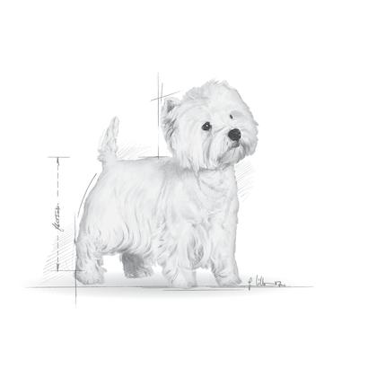 BHN 2012 - Part 1 - Emblematic pets pictures - WEST-AD-BHN-ILLUSTR