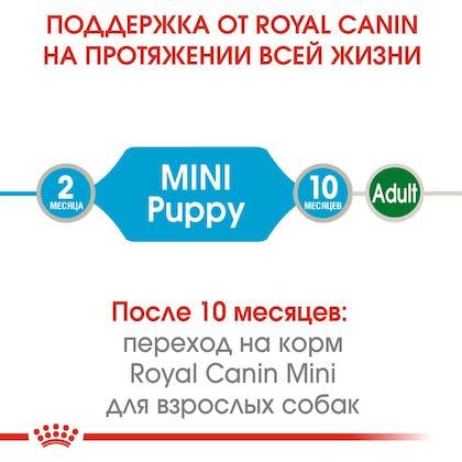 HI_SHN_WET_MINI_PUPPY_ru_1