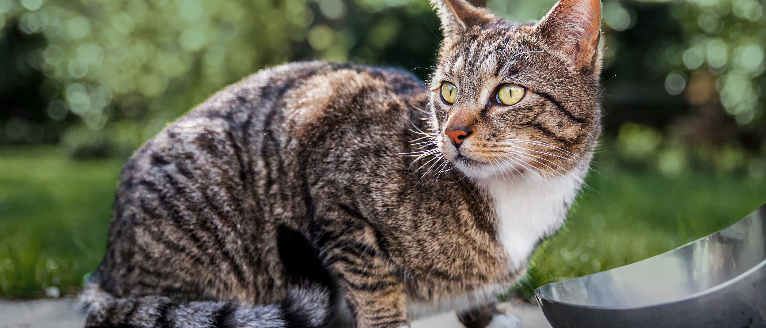 The symptoms of digestive problems in your cat - Royal