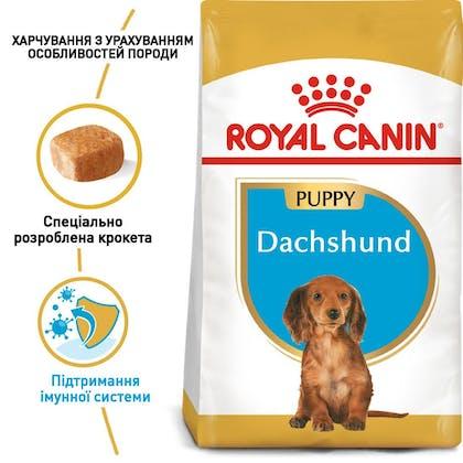 RC-BHN-PuppyDachshund_1-UA.jpg