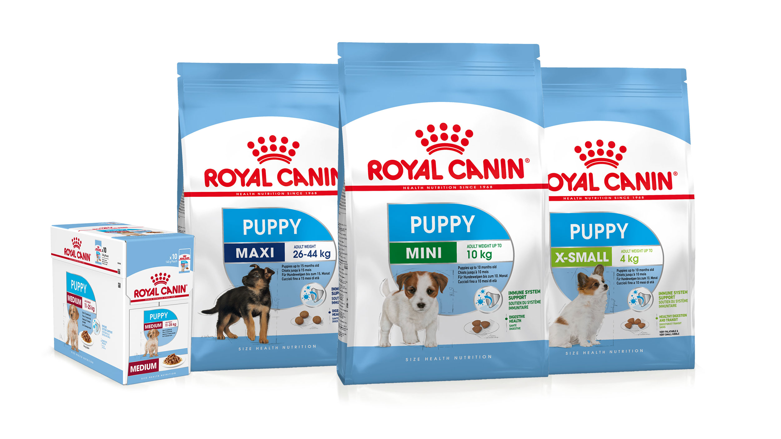 What, and how, to feed your pregnant dog - Royal Canin