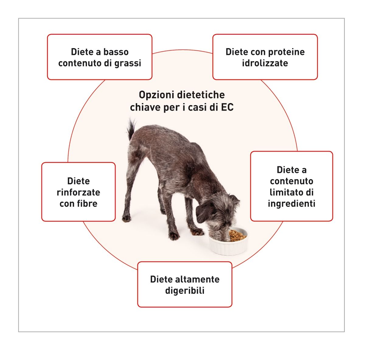 Per i pazienti con malattia GI sono in commercio strategie alimentari molteplici. Le cinque utilizzate più spesso includono: (I) diete a basso contenuto di grassi, (II) diete rinforzate con fibre, (III) diete altamente digeribili, (IV) diete a contenuto limitato di ingredienti e (V) diete con proteine idrolizzate. Ogni tipo di dieta deve essere utilizzato nelle aree specifiche delle enteropatie croniche dove è più probabile che apportino beneficio all'animale.