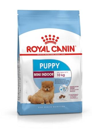 Mini Indoor Puppy