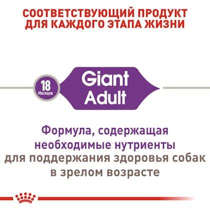 RC-SHN-AdultGiant_2-RU.jpg