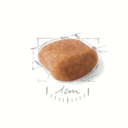 POOD-AD-CROC