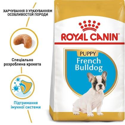 RC-BHN-PuppyFrenchBulldog_1-UA.jpg