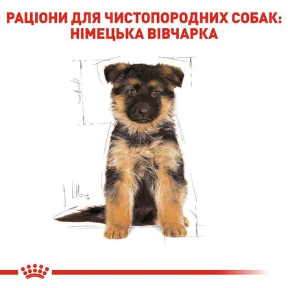 RC-BHN-PuppyGS_5-UA.jpg