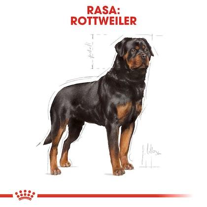 RC-BHN-Rottweiler-CV-Eretailkit-1-pl_PL