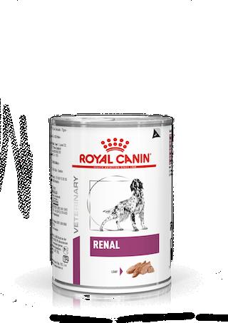 독 레날 캔