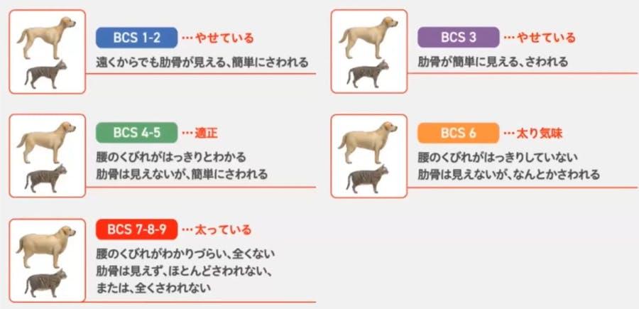 601_Japan_local_CA_Inuneko_Campaign_BCS