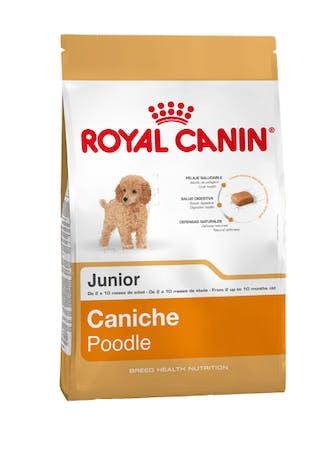 Poodle Junior