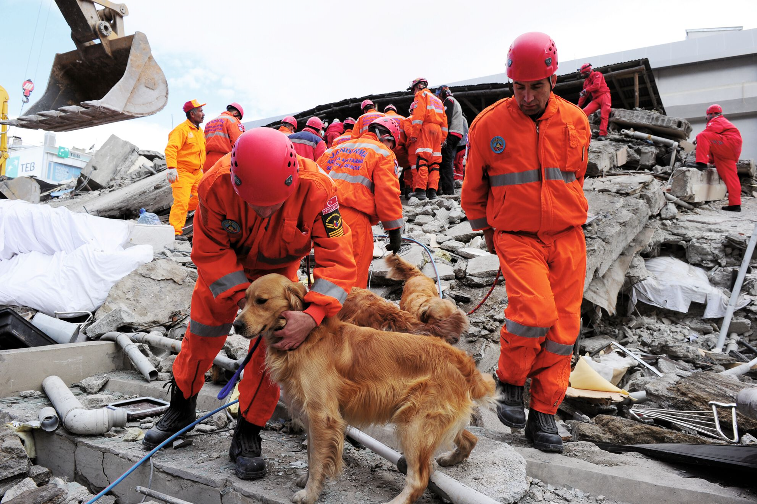 An urban search and rescue dog perches on rubble, representative of the unstable terrain these dogs must navigate.