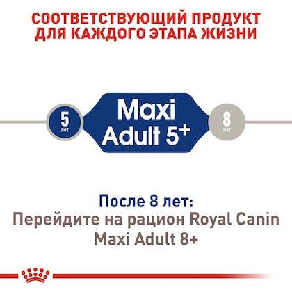 RC-SHN-AdultMaxi5_2-RU.jpg