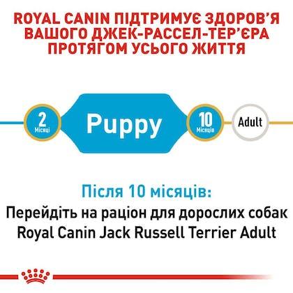 RC-BHN-PuppyJackRussell_2-UA.jpg