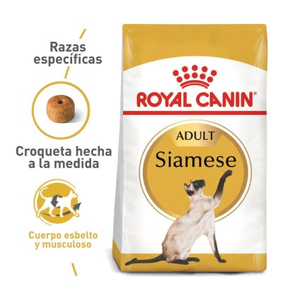 SIAMESE ADULT COLOMBIA 1