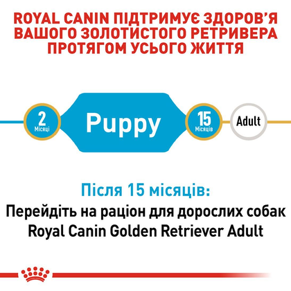 RC-BHN-PuppyGoldenRetriever_2-UA.jpg