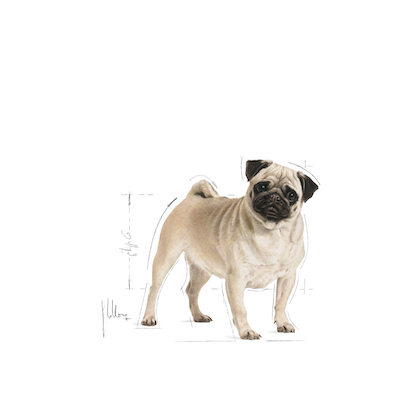 PUG-AD-ILLUSTR-FACING-BHN17.tif