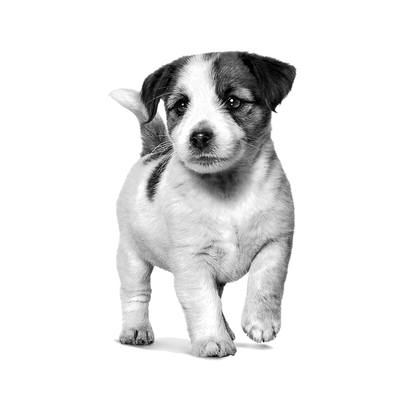 VHN-PACKAGING EMBLEMATIC-ALL PUPPIES-VHN TRANSVERSAL PACKAGING CHARTER