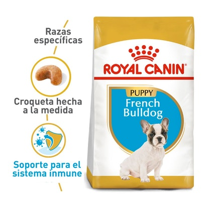 FRENCH BULLDOG PUPPY COLOMBIA 1
