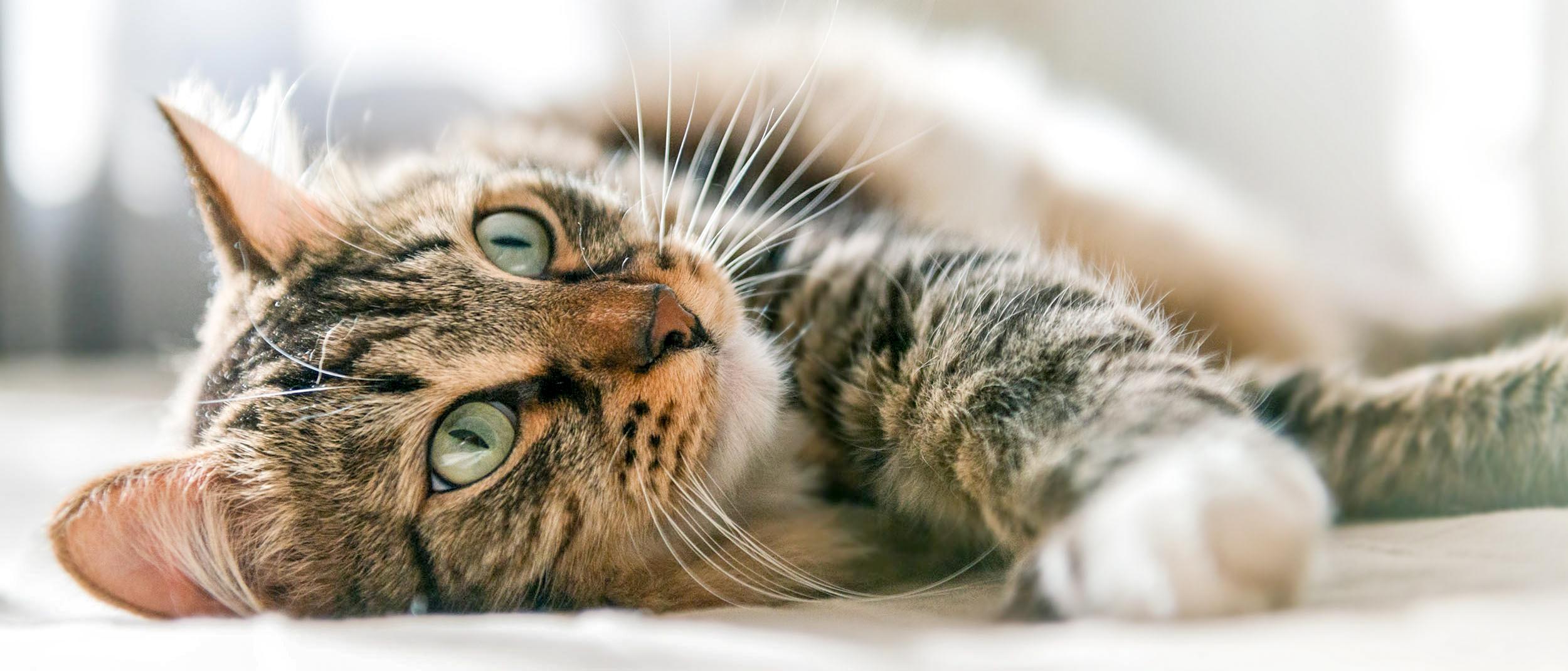 Kissan ikä ihmisen iässä