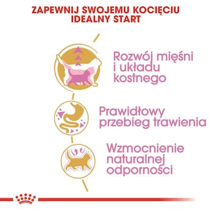 RC-FBN-KittenBritishShorthair-CV2-cat_001_POLAND-POLISH