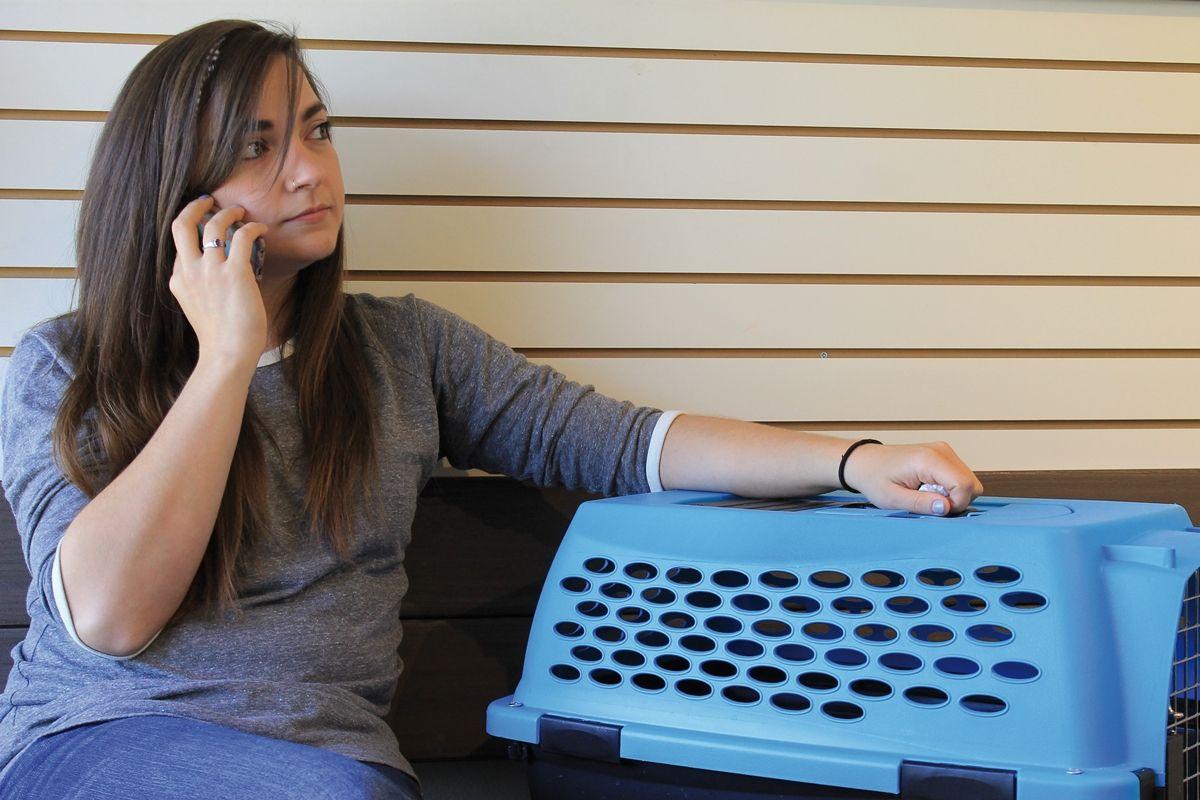La salle d'attente peut être une source de stress à la fois pour le propriétaire et pour le chat mais le programme CFP propose des moyens pour faire baisser les tensions.