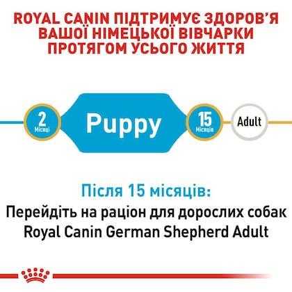 RC-BHN-PuppyGS_2-UA.jpg