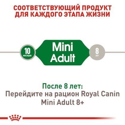 RC-SHN-AdultMini_2-RU.jpg