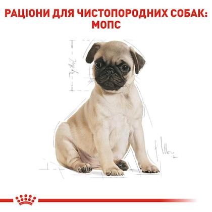 RC-BHN-PuppyPug_5-UA.jpg