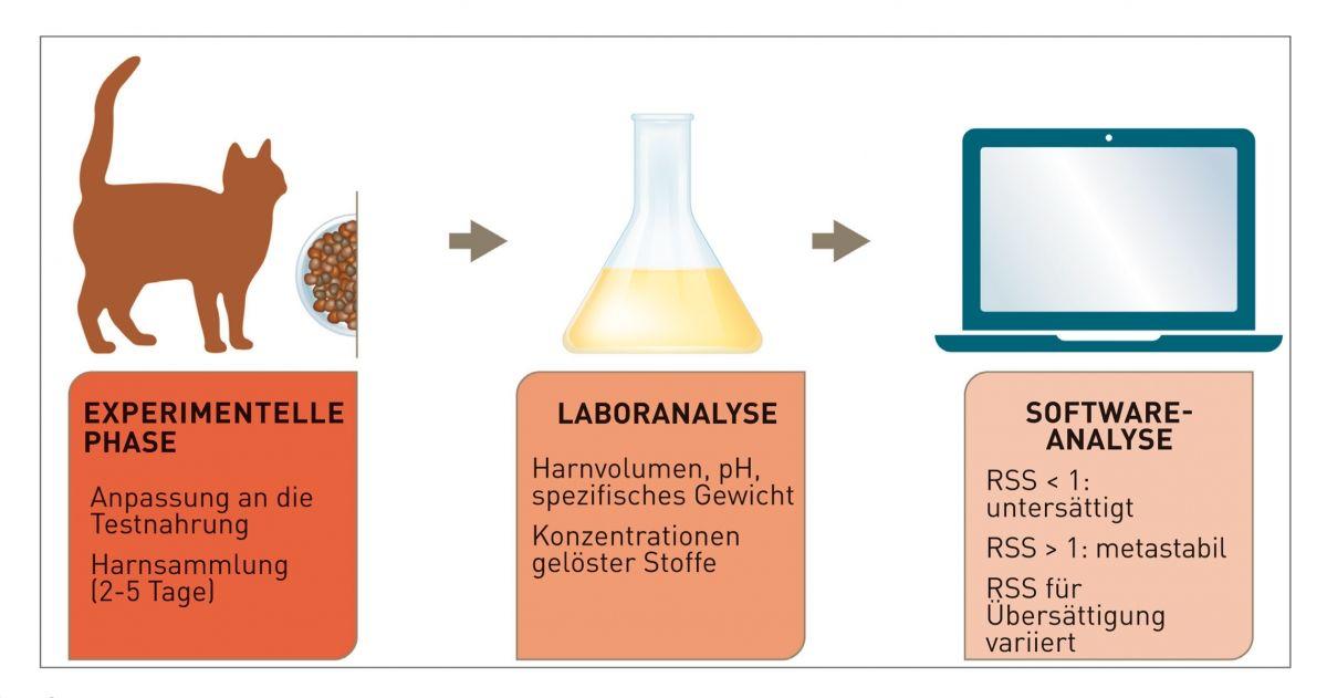 Abbildung 1. Bestimmung der Relative Supersaturation (RSS) für ein gegebenes Kristall unter experimentellen Bedingungen. © Cecilia Villaverde/Redrawn by Sandrine Fontègne