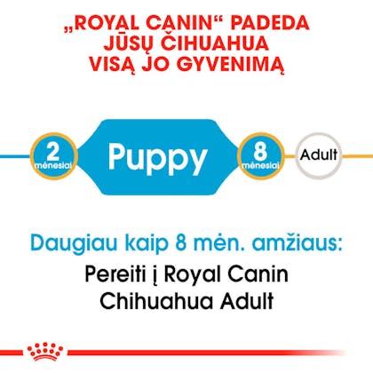 RC-BHN-PuppyChihuahua-CM-EretailKit-1-lt_LT