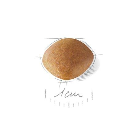 CAV-JU-CROC