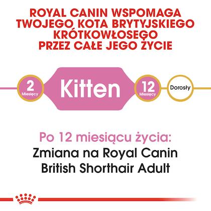 RC-FBN-KittenBritishShorthair-CV1_001_POLAND-POLISH