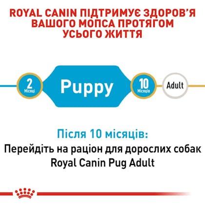 RC-BHN-PuppyPug_2-UA.jpg